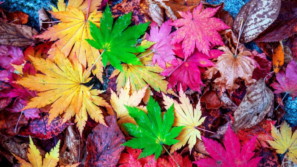 Many colors in leaves